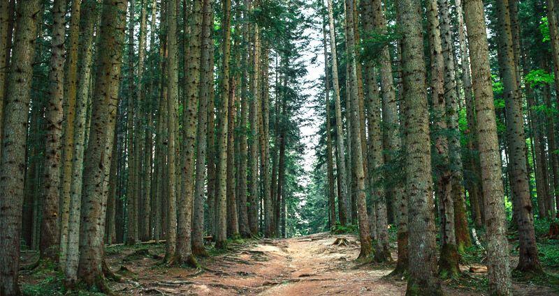 academia-oposiciones-agente-forestal